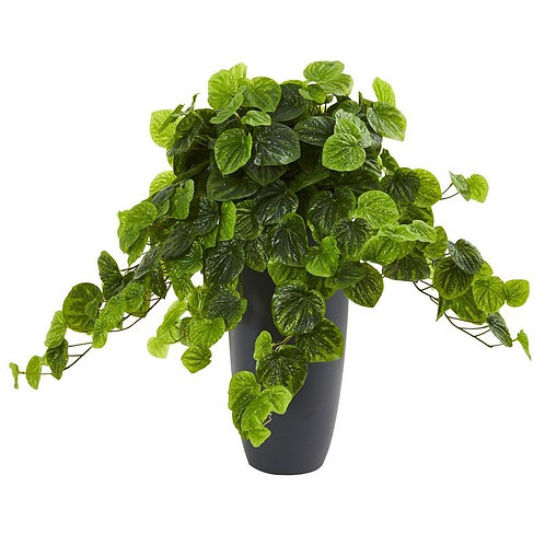 "26""  Peperomia Artificial Plant in Decorative Planter (Real Touch)"
