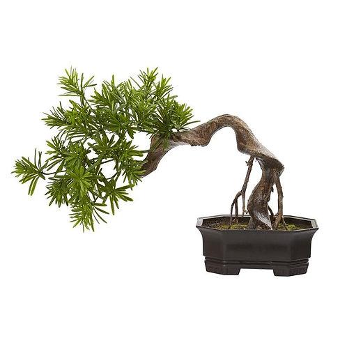 "20""  Bonsai Styled Podocarpus Artificial Plant"