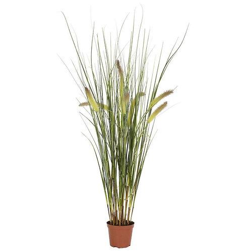 2.5' Grass Plant