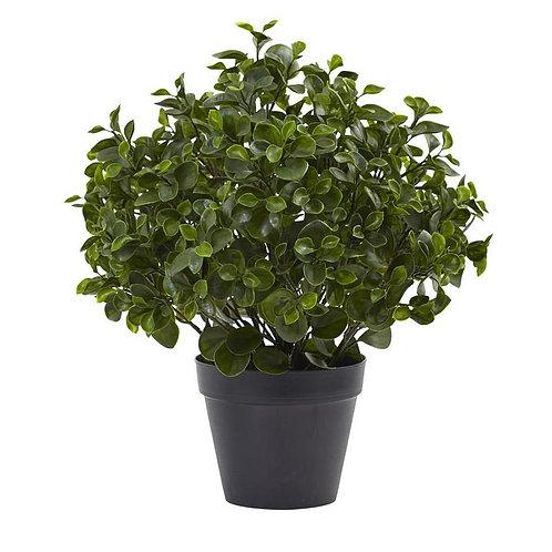 "23""  Peperomia Plant UV Resistant (Indoor/Outdoor)"
