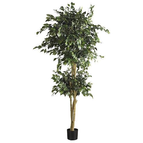 6' Double Ball Ficus Silk Tree