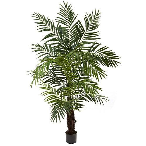 6' Areca Palm Tree