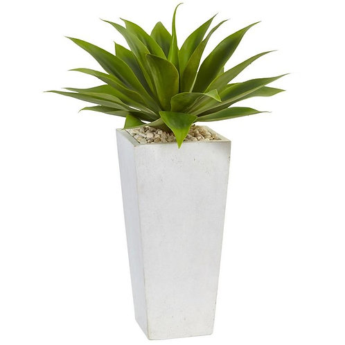 Agave in White Planter