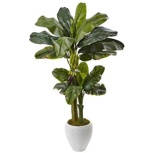 Double Stalk Banana Tree in White Planter