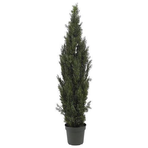 6' Mini Cedar Pine Tree (Indoor/Outdoor)