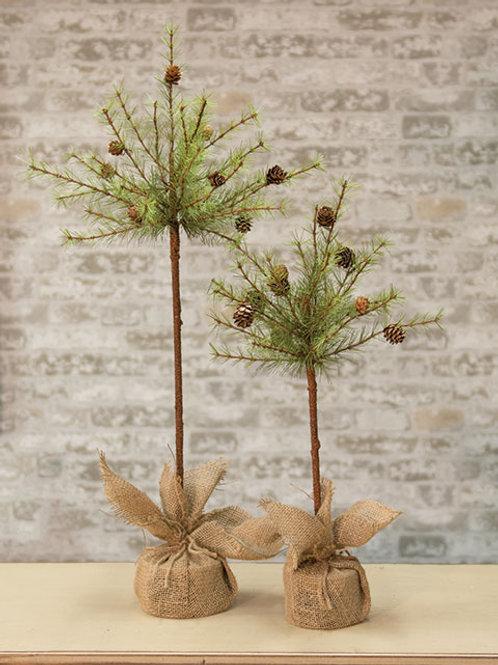 "Cypress Topiary Tree 30"""