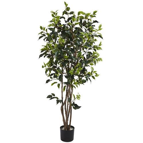 5' Ficus Bushy Silk Tree