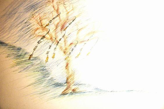 albero%20curve_edited.jpg