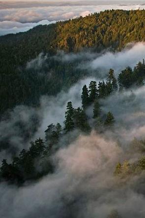 ANIEBLA-FOREST.jpg