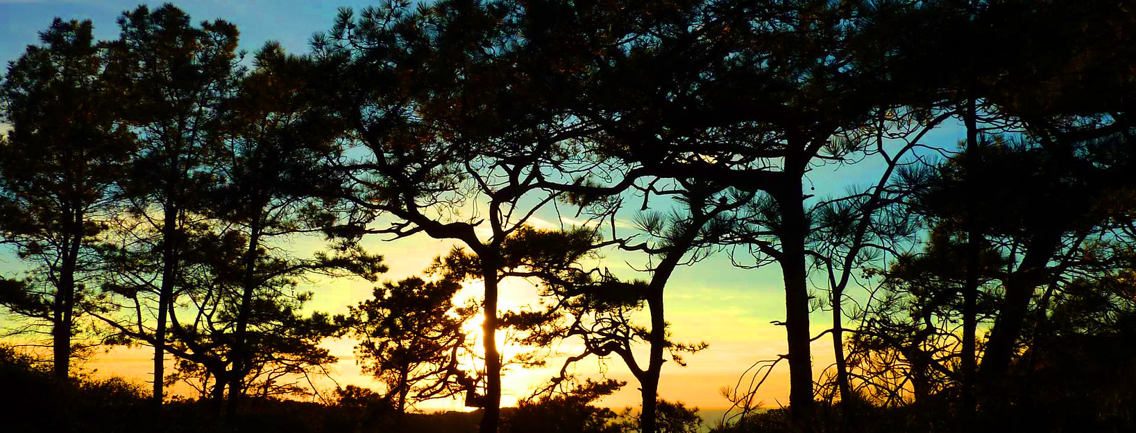 Torrey Pine Sunset II.jpg
