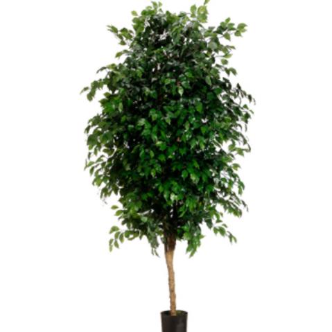 Artificial Ficus Tree in pot - 7' Tall