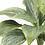 "Thumbnail: 8"" H Succulent Pick"