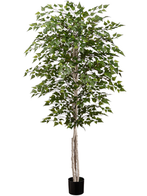 Silk Birch Tree in pot - 6' Tall