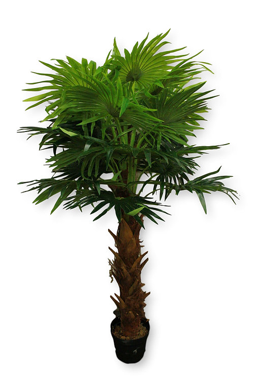 6' Real Touch New Fan Palm Tree in pot