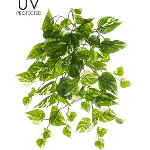 "19"" UV Protected Pothos Bush"