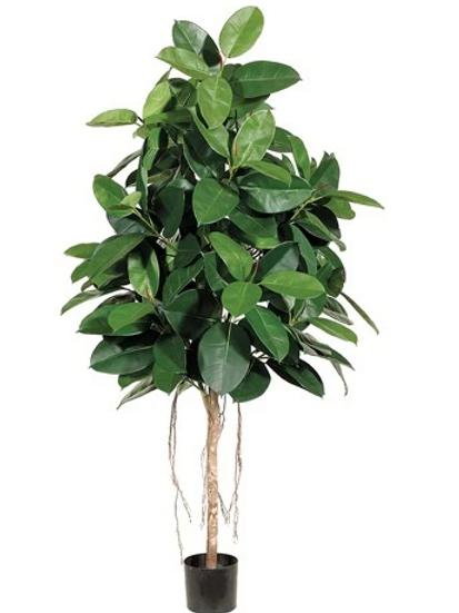 Silk Rubber Tree in pot - 6' Tall