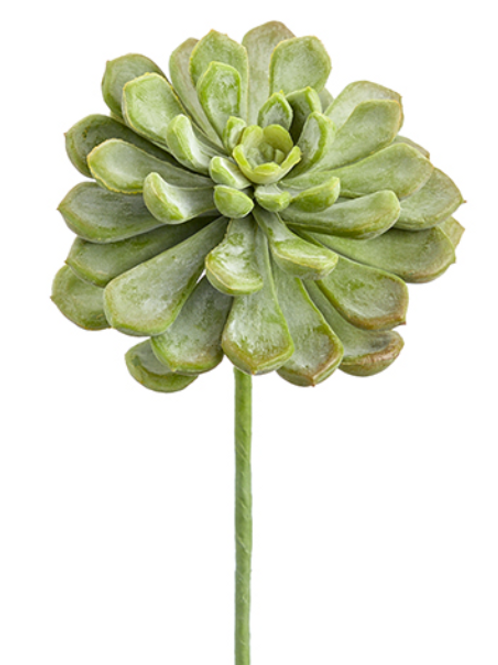 "6"" Soft Baby Aeonium Pick in Frosted Green Color"