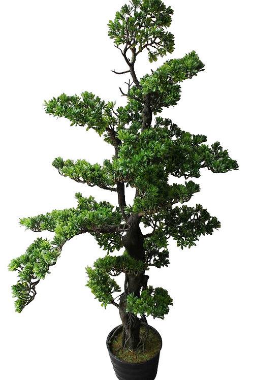 "Artificial Podocarpus Bonsai in pot -52"" Tall"