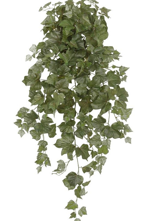 "36"" Algerian Ivy Hanging Bush x 12 w/250 Leaves"