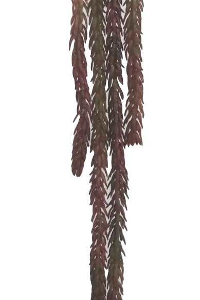 "23"" Real Touch Hanging Succulent"