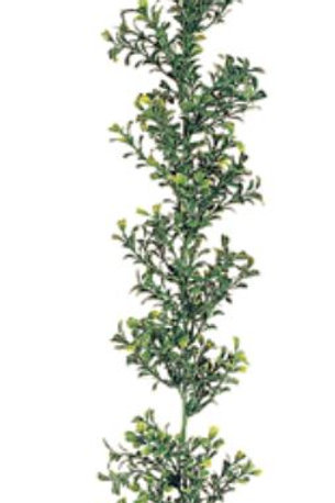 Plastic Boxwood Garland - 6' Long