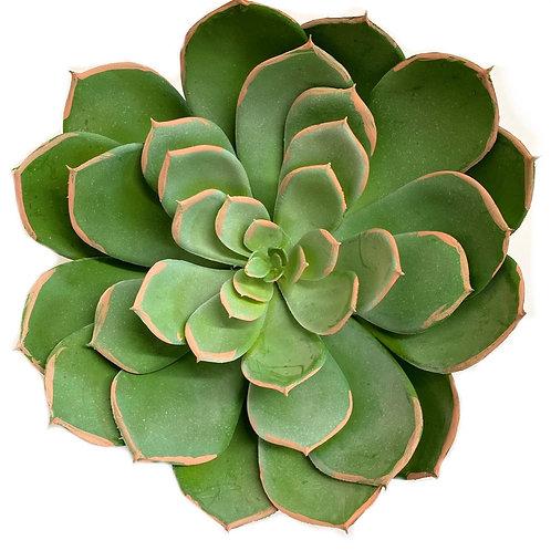 """8"""" D x 7"""" H Succulent Pick"""