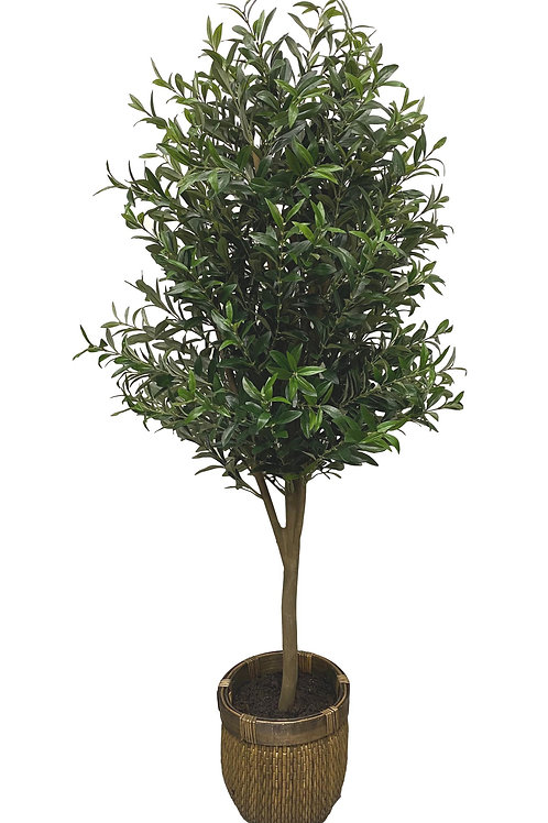 5.5' Artificial Olive Tree in Brown Basket