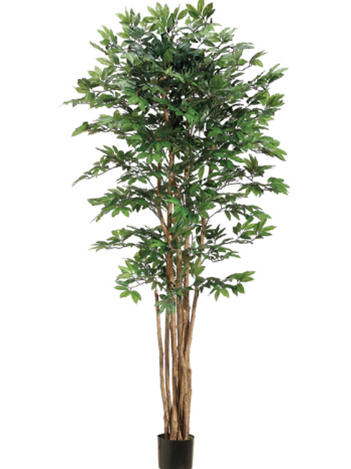 6' Artificial Pacific Lychee Tree with 2088 Leaves