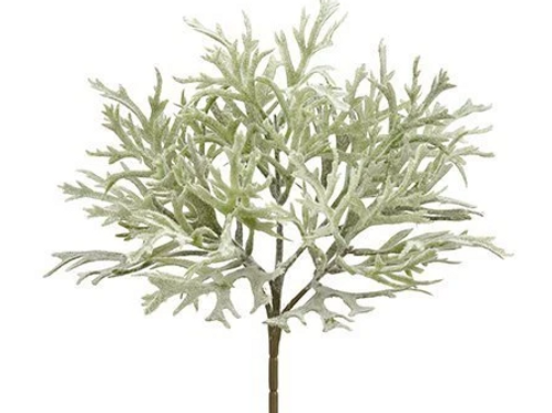 "12"" Dusty Miller Bush  Green Gray"