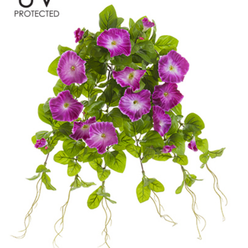 "20"" UV Protected Petunia Hanging Bush x 12"