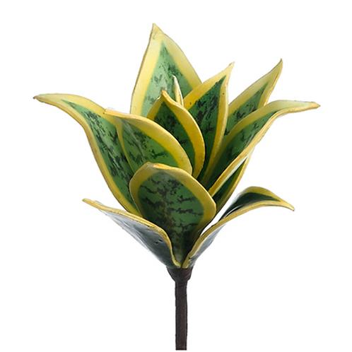 "8"" Mini Sanseveria Plant  Green Cream"
