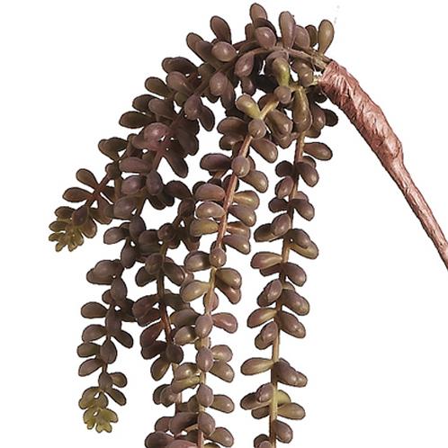"""19"""" Long Sedum Vine Succulent"""
