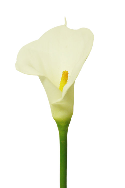 "Real Touch Callalily Stem - 28"" Long"