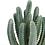 """Thumbnail: 9"""" Mini Column Cactus Pick"""