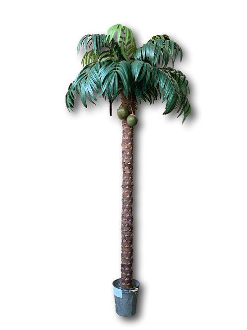 12' Coconut Palm X 15 #TCP393