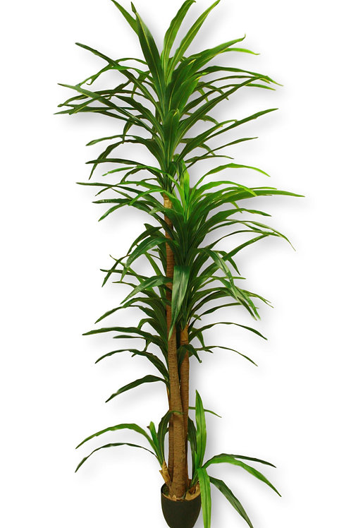 7' Real Touch Yucca Tree x 3
