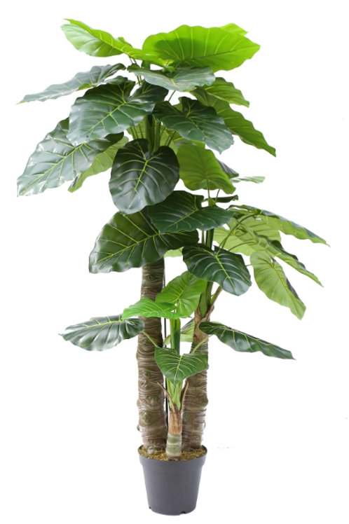 6' Real Touch Taro Tree