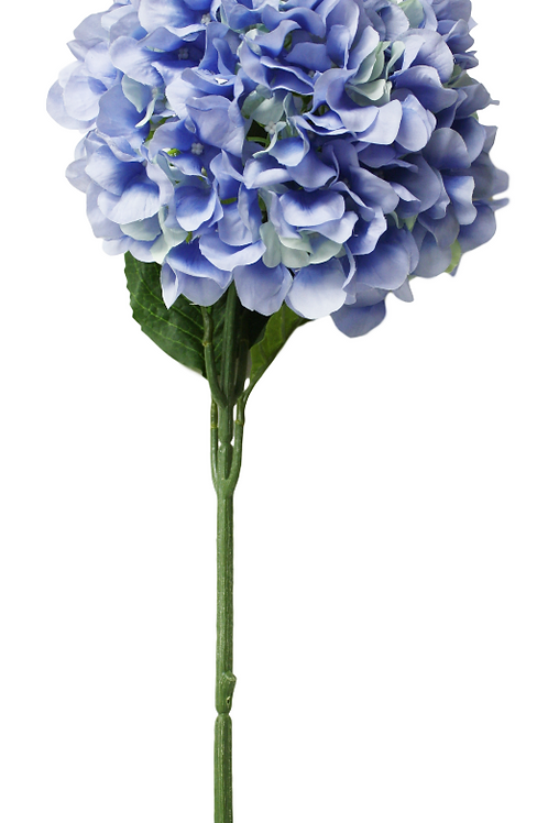 Item# INT8001-Blue