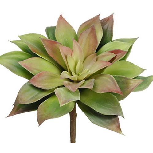"""6.5"""" Echeveria Pick Green Fushia"""