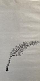 minimal windblown tree