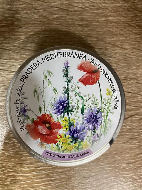 Mezcla de semillas pradera mediterránea