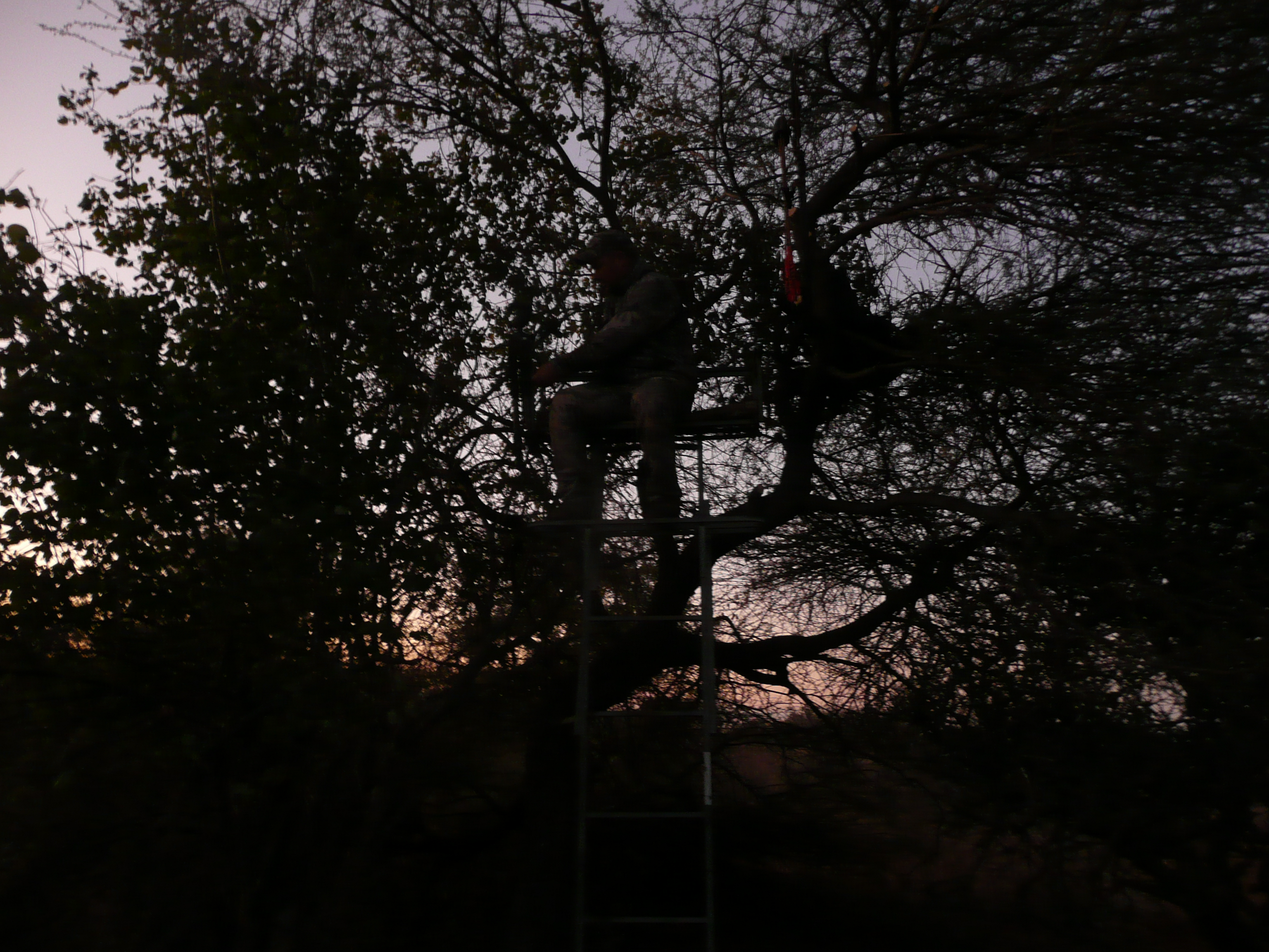 twilight treestand