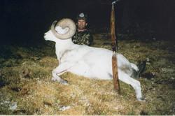 Dahl Sheep AK