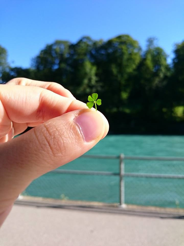 small four leaf clover