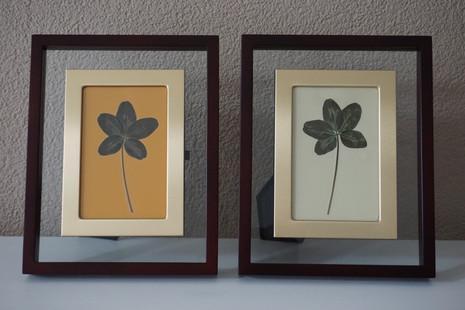 5-leaf clovers in our collection
