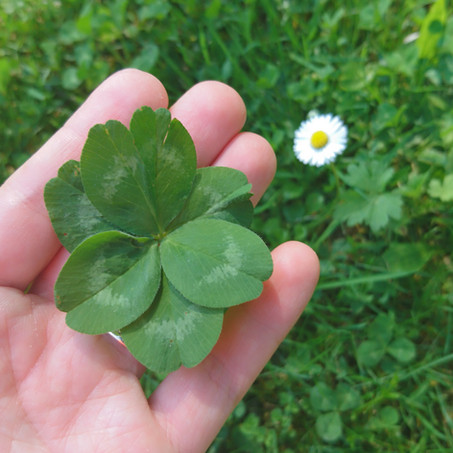 What a beautiful six-leaf clover!