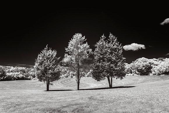 Horizon Park, 2018