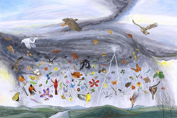 Raining Birds, Bugs and Blooms, 2020