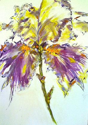 """Wild abandon"" Iris, 2012"