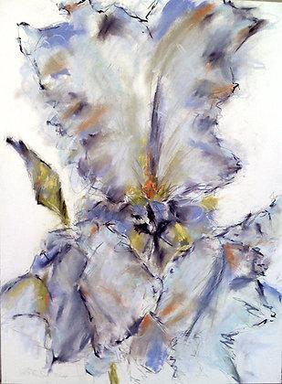 """Faye Stout's iris"", 2011"